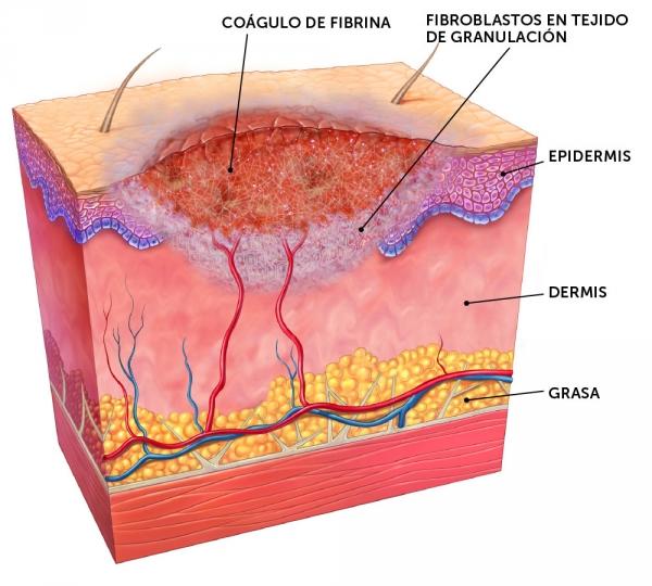 wound_healing_spansk